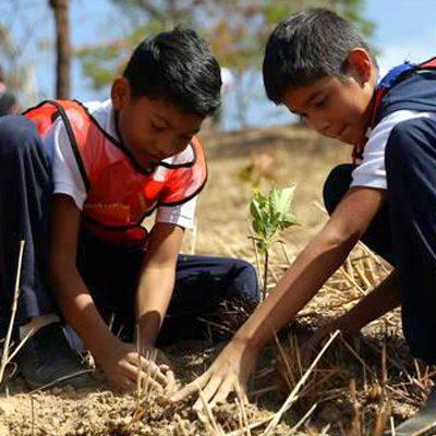 Más de 300 estudiantes han participado en Expedición Pedagógica Árboles de Caracas