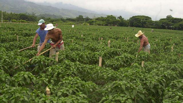 Federación Campesina de Venezuela propone reforma de leyes para fomentar la economía productiva