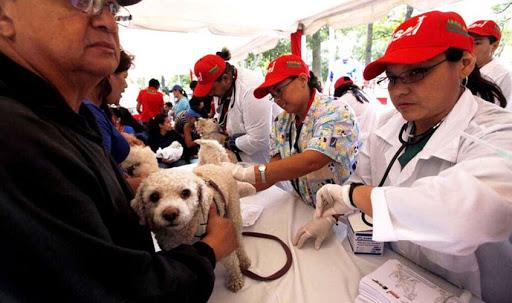 Movimiento Animalista de Venezuela convoca al debate por la defensa de la vida
