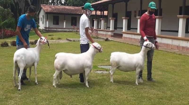 Impulsan Proyecto de Ley para fomentar la producción de la ganadería caprina y ovina en Monagas